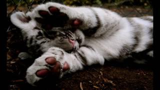 Удивительная кошка. Интересные факты о кошках