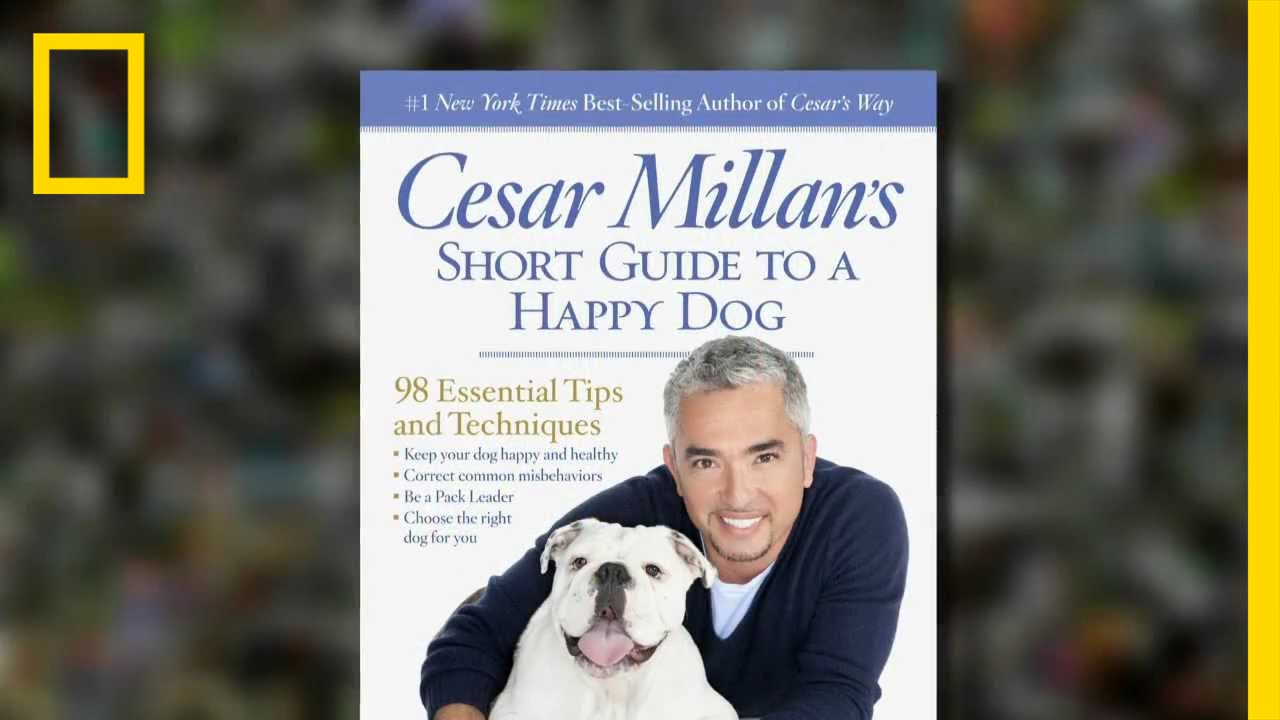 Cesar Millan's Tips For a Happy Dog | National Geographic thumbnail