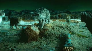女孩救下一只猫,没想到它是活了5000年的神,送给她一件礼物