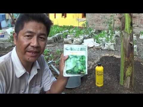 Video Budidaya Bayam Cabut Skala Kecil Secara Mudah Bagi Pemula