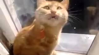 Смотреть онлайн Кот застрял в окне, сидит и смотрит на хозяина