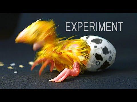 Experiment: was aus einem Ei geschlüpft ist?