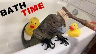 BATH TIME FOR GIANT PET LIZARD !!