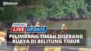 Kronologi Pelimbang Timah Diterkam Buaya di Belitung Timur, Jasad Korban Ditemukan Tak Utuh