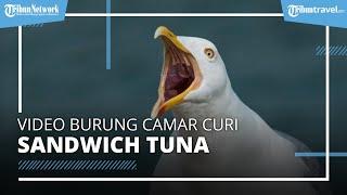 Video Kocak Burung Camar yang Masuk Toko dan Curi Sandwich Tuna