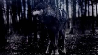 BigBoss - Solitude ( Official video )