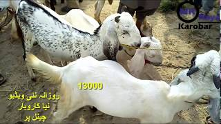 goat farming cost and profit in india - TH-Clip