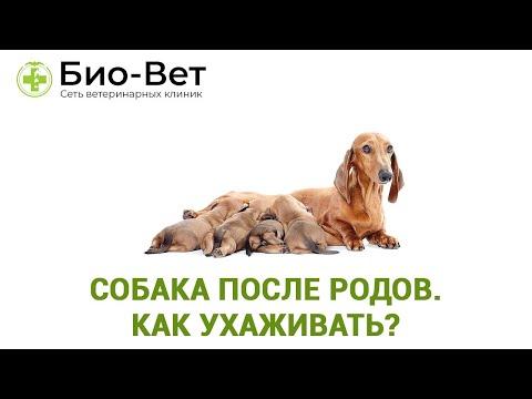 Собака после родов. Как ухаживать?