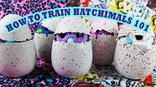 How to Train Hatchimals – Hatchimal Training 101