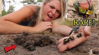 We FOUND Americas RAREST Dung Beetle In Our DOGS POOP!!!!! UNBELIEVABLE!