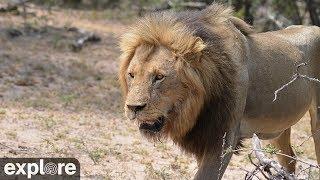 Africam Naledi Cat-EYE powered by EXPLORE.org