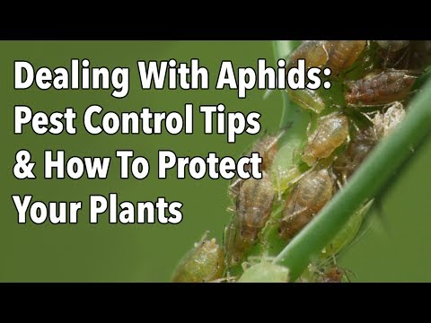 , title : 'Dealing With Aphids: Pest Control Tips & How To Protect Your Plants