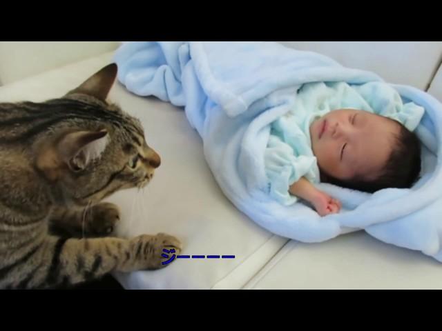 赤ちゃんと初対面のネコに思わず笑顔になる!お母さんと一緒に新入りも一緒にキタにゃ