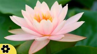 Zen Meditation Music, Soothing Music, Relaxing Music Meditation, Zen, Binaural Beats, ✿3105C