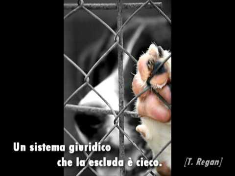 Anteprima Video Uno dei video più commoventi per farci capire il Cane
