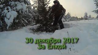 30 декабря За Ёлкой!!!