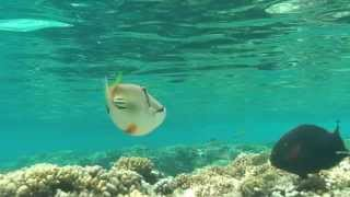 preview picture of video 'Hurghada - snorkeling 2014 HD'