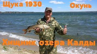 Какая рыба клюет на озере калды