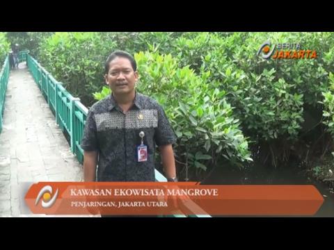 Ekowisata Mangrove DKI Alternatif Wisata Alam di Pesisir Utara Jakarta