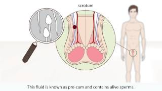 How male orgasm works - The male orgasm explained - Sex Education