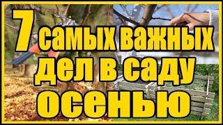 7 самых важных дел в саду осенью / Готовим фруктовый сад к зиме