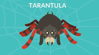 Tarantula video for kids
