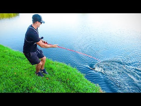 This Lure Catches EVERYTHING (Bank Bass Fishing)