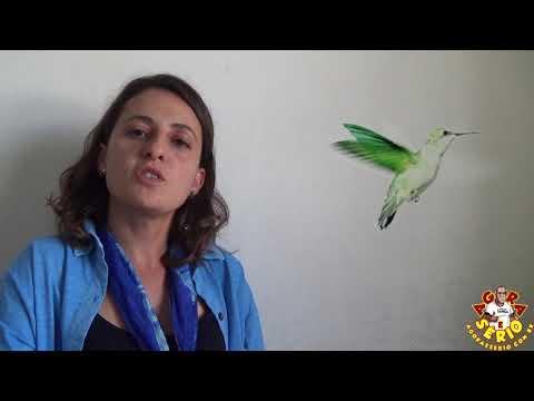 Carol Secretária do Meio Ambiente fala sobre o caso da Lagoa do 72