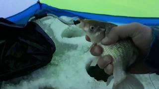 Озера для рыбалки в курганской области