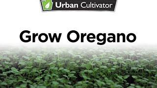 How to Grow Oregano Indoors | Urban Cultivator