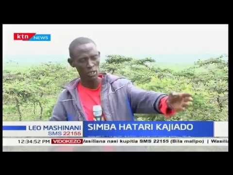 Mfugaji kaunti ya Embakasi apata hasara baada ya kupoteza ng'ombe wake watano walioliwa na simba