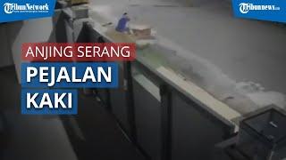 Detik-detik Seekor Anjing Serang Pejalan Kaki hingga Jatuh dan Terluka, Kejadian Terekam CCTV