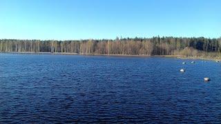 Журавушка, турбаза, Приозёрский район, Ленинградская область, смешанный лес, отличный отдых!