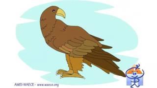 Bits de Inteligencia: Aves (Tarjetas de Fijación Visual)