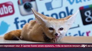 News Mews #10. ОлимпиВАДА, Канделаки, Джиган