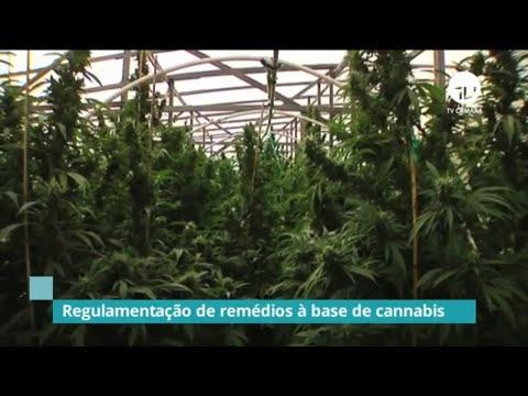 Câmara debate regulamentação de remédios à base de Cannabis - 07/11/19