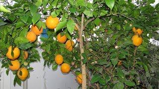 Как сделать зимний сад  Домашняя оранжерея Сергея Маринкова