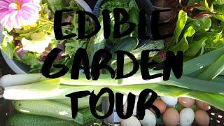 Edible Garden Tour #selfsufficient #homestead #Australianhomesteader #aussiehomestead