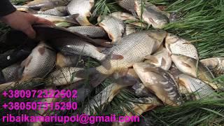 Отчеты о рыбалке в мариуполе