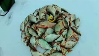 Как ловить много рыбы зимой. Подлещик, густера