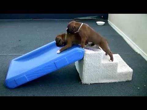 Funny Dogs – Puppies On Slides Compilation!