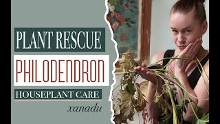 Houseplant Rescue: How to bring your Plant Back to Life.