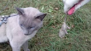 Кот игнорирует мышку