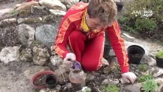 Как сделать альпийскую горку видео