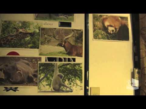 【第8回24時間映画祭】ボラッチョプロダクション「草食動物生体レポート」