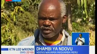 Dhambi Ya Ndovu: Wananchi wana wasiwasi mkubwa,Ndovu wanavamia mashamba yao