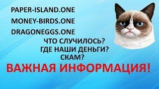 PAPER-ISLAND | MONEY-BIRDS  | DRAGONEGGS ЧТО БУДЕТ ДАЛЬШЕ С ПРОЕКТАМИ?ВАЖНАЯ ИНФОРМАЦИЯ ДЛЯ ВСЕХ