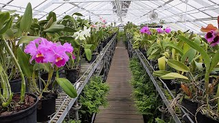 Virtual Tour Of The Longwood Orchid Houses
