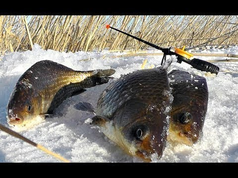 Как сделать устройство которое подсекает рыбу на зимней рыбалке