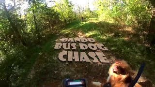 Bando Bus Dog Chase | Forck-In Quad FPV Freestyle Insta360 GO